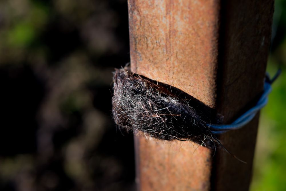 Photo in Random #mouse #hair #fur #cow #barbed wire #post #fujifilm #x-t1