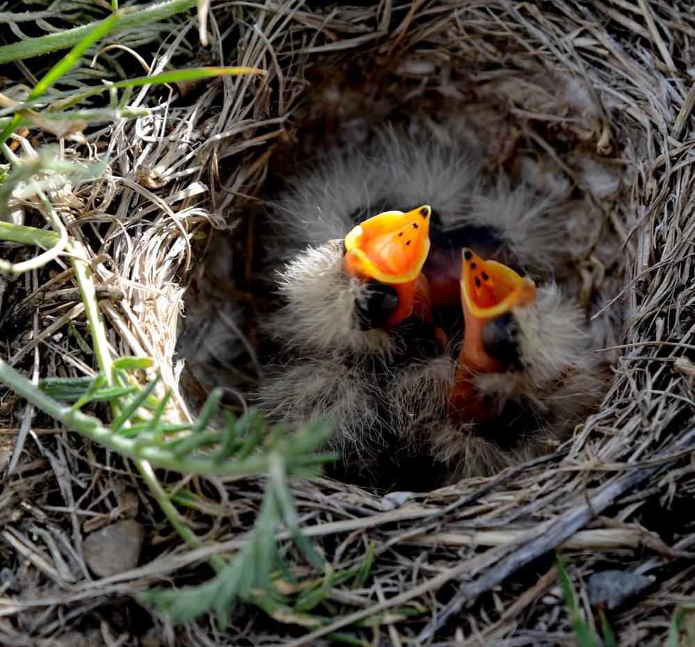 Photo in Animal #bird #feed #hungry #mother