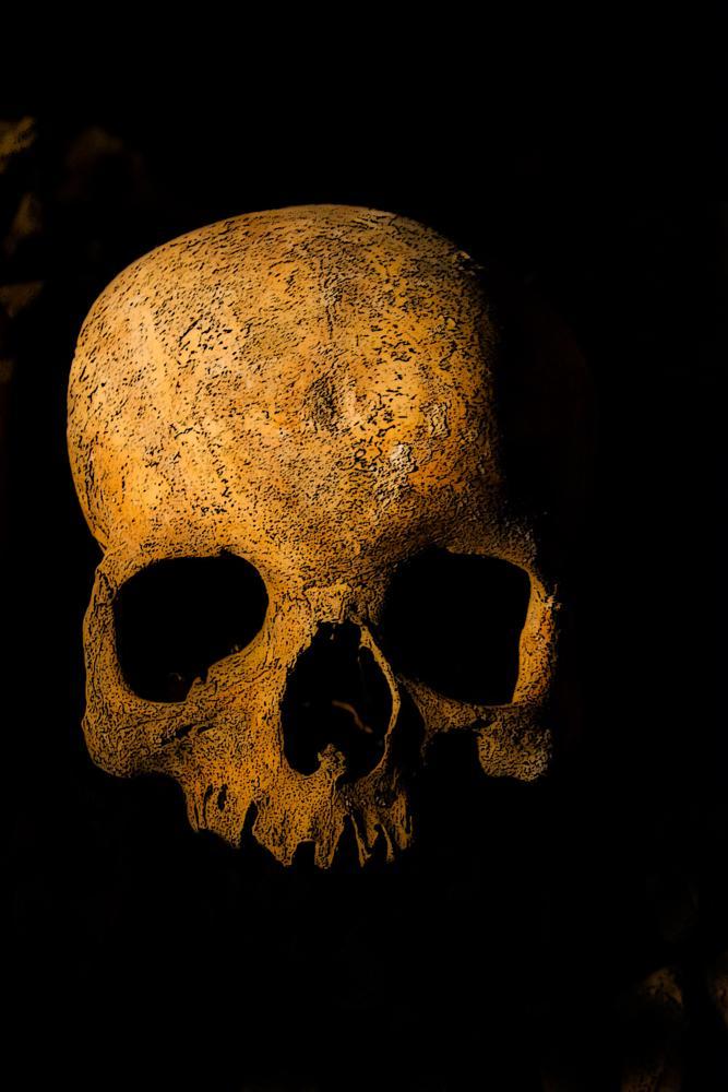Photo in Still Life #skull #catacombs #paris #dark