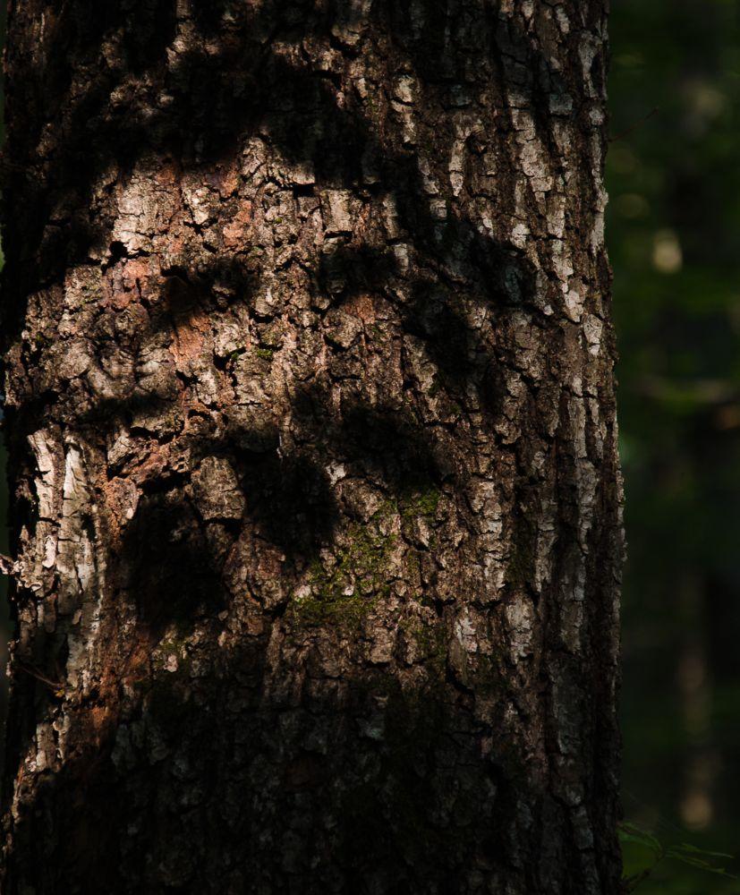 Photo in Nature #forest #wood #ghost #szellem #erdő #fa #árnyék #shadow