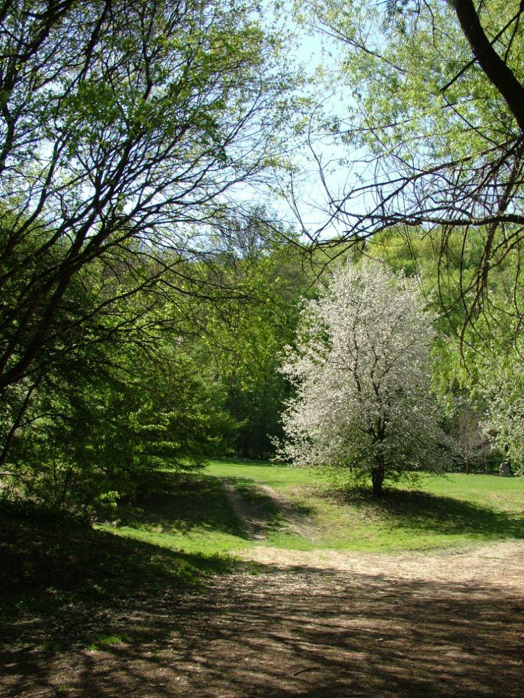Photo in Nature #tisztás #solymár #erdő #forest