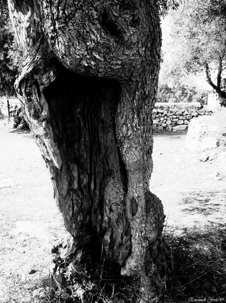 Photo in Black and White #black & withe #bianco e nero #trees #tree #rural #nature #natural #bello #bella #beautiful