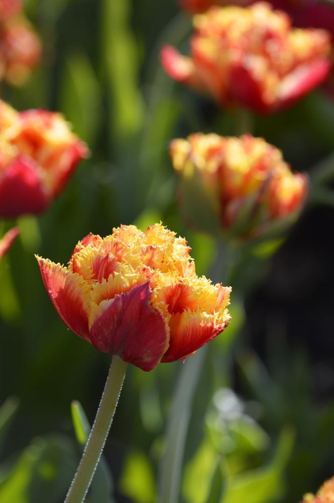 Photo in Random #flowers #festival #garden