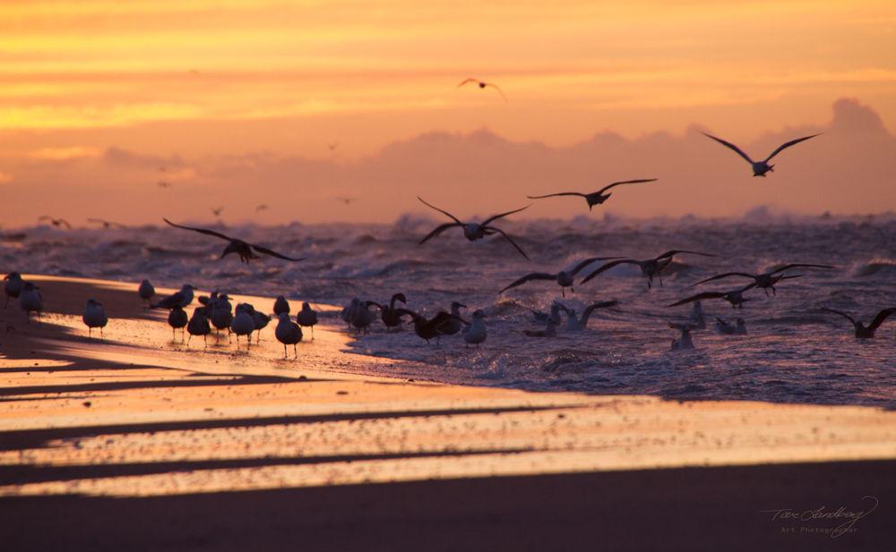 Photo in Landscape #denmark #skagen #landscape #birds