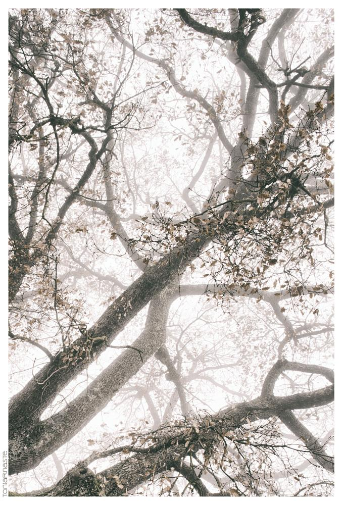 Photo in Nature #tree #winter #arms