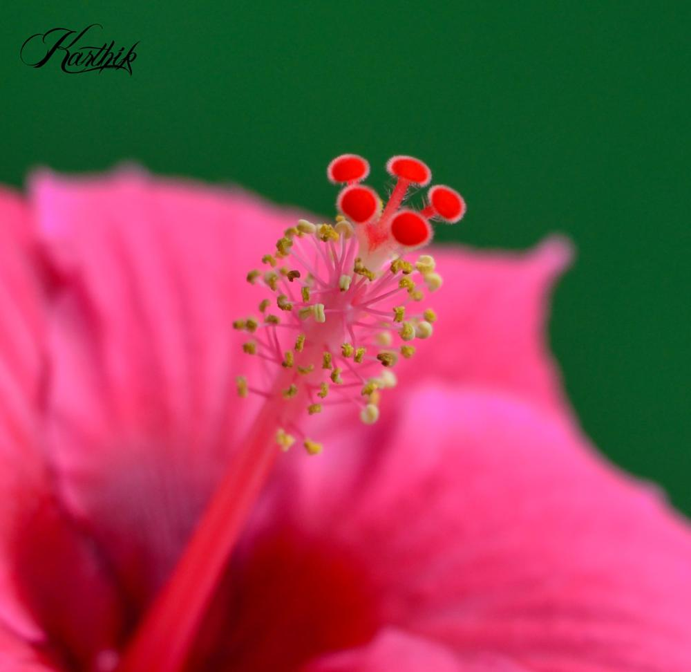 Photo in Nature #flower #nature #garden #green #plant #leaves #pink