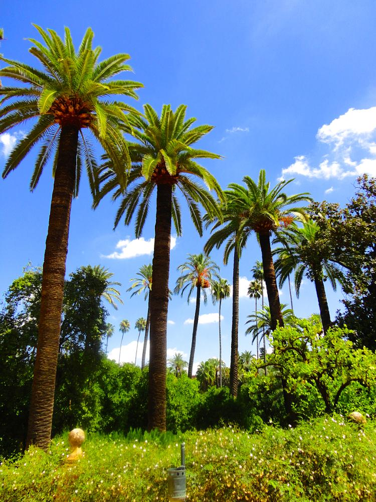 Photo in Nature #palms #spain #summer