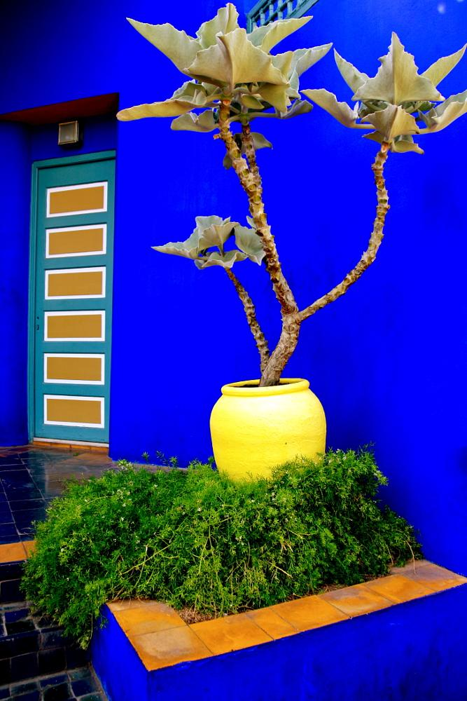 Photo in Random #blue #plant #morocco