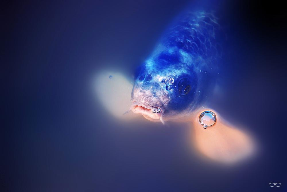 Photo in Animal #fish #pez #water #agua #chachicir