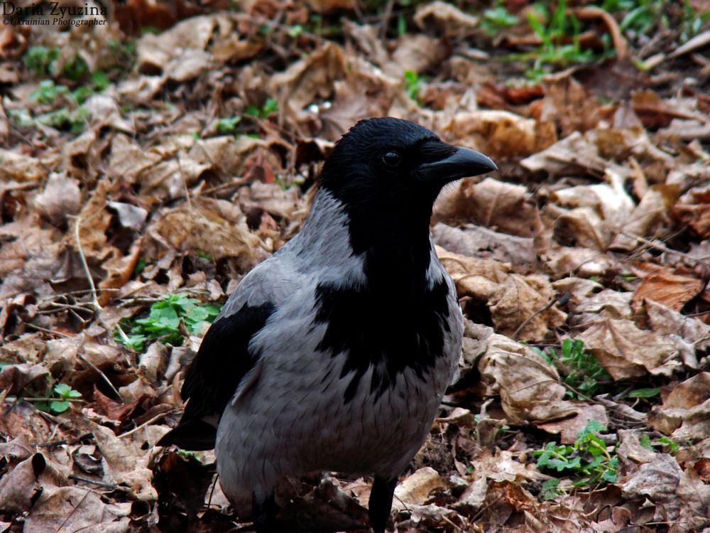 Photo in Animal #nature #animal #bird