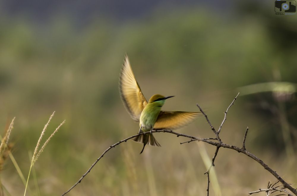 Photo in Nature #green bee eater #wings #freedom #birding