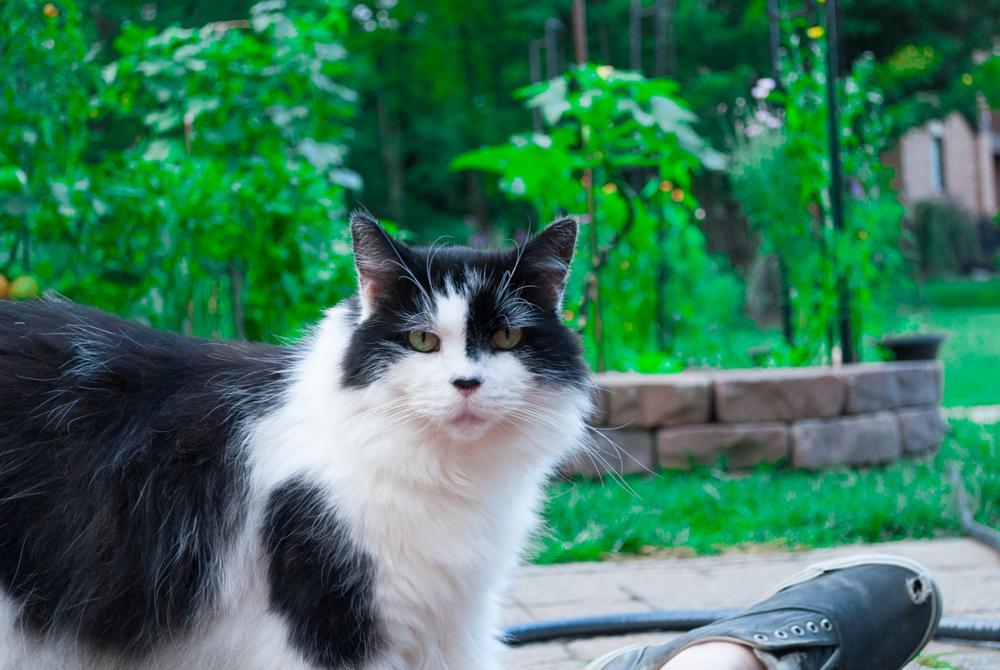 Photo in Animal #cat #pet #animal #garden #black #white #eyes #kitten #cats