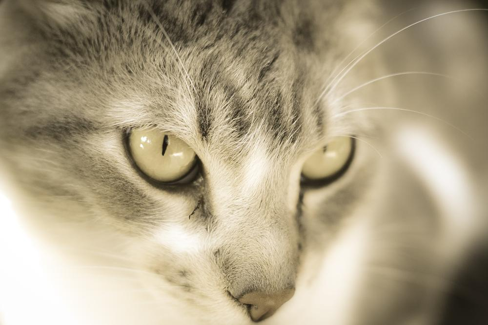 Photo in Animal #cat #eyes #ligh