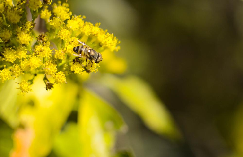 Photo in Nature #bee #flower #yellow #sun #morning