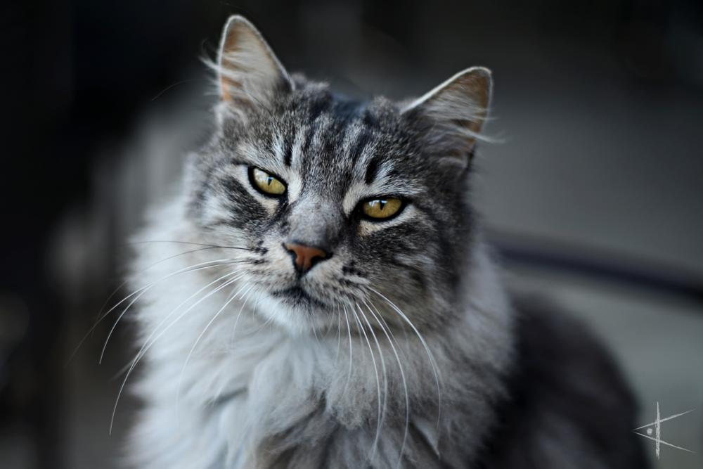 Photo in Animal #cat #chat #animal #eyes #yeux