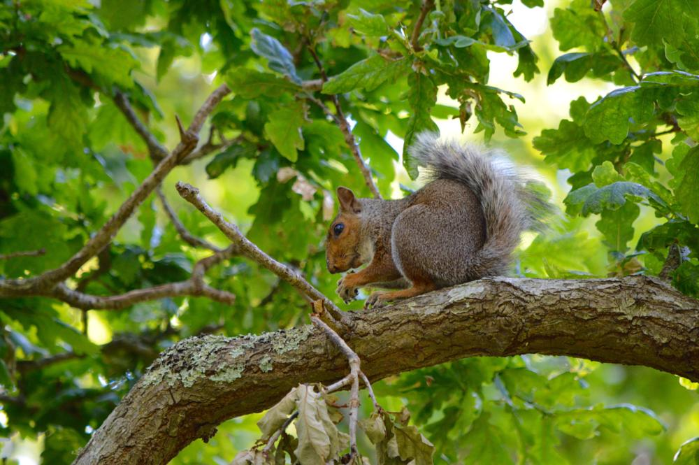 Photo in Animal #squirrel #arne #tree