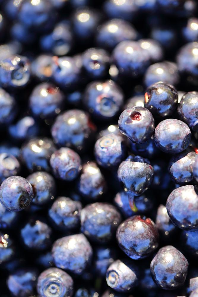 Photo in Food #blueberry #sweden #dalsland #blue #berries