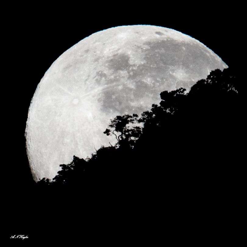 Photo in Nature #forest #moon #moon-set