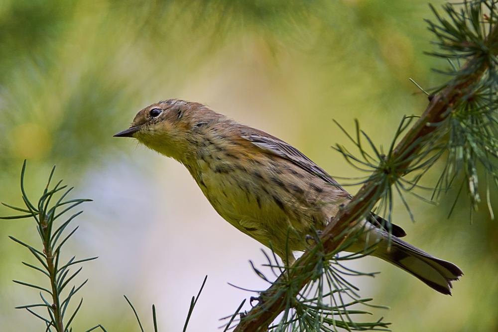 Photo in Animal #bird #wildlife #nature #colours