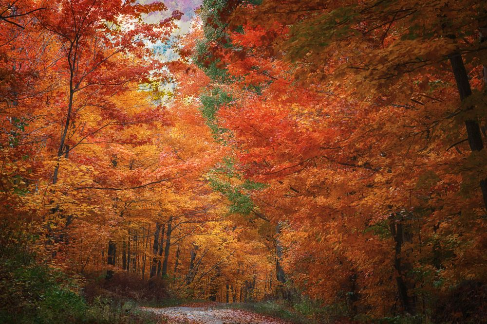 Photo in Nature #autumn #fall #colours #leaves #trees #forest #red #orange #yellow #nature #beauty #colorful