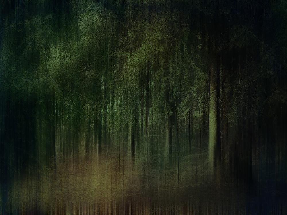 Photo in Fine Art #forest #woods #trees #dream