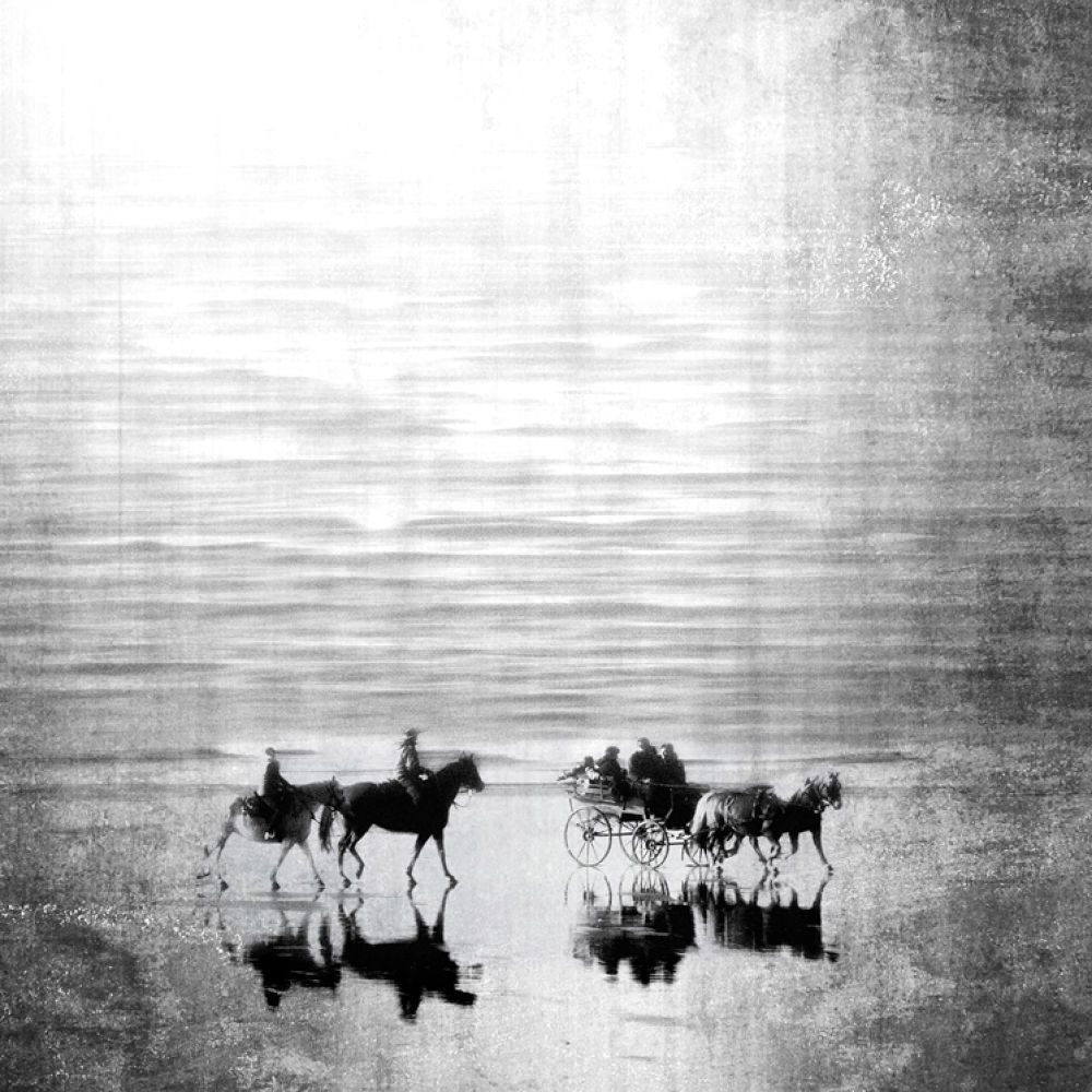 Photo in Fine Art #horse #beach #fine art #black /white #reflection