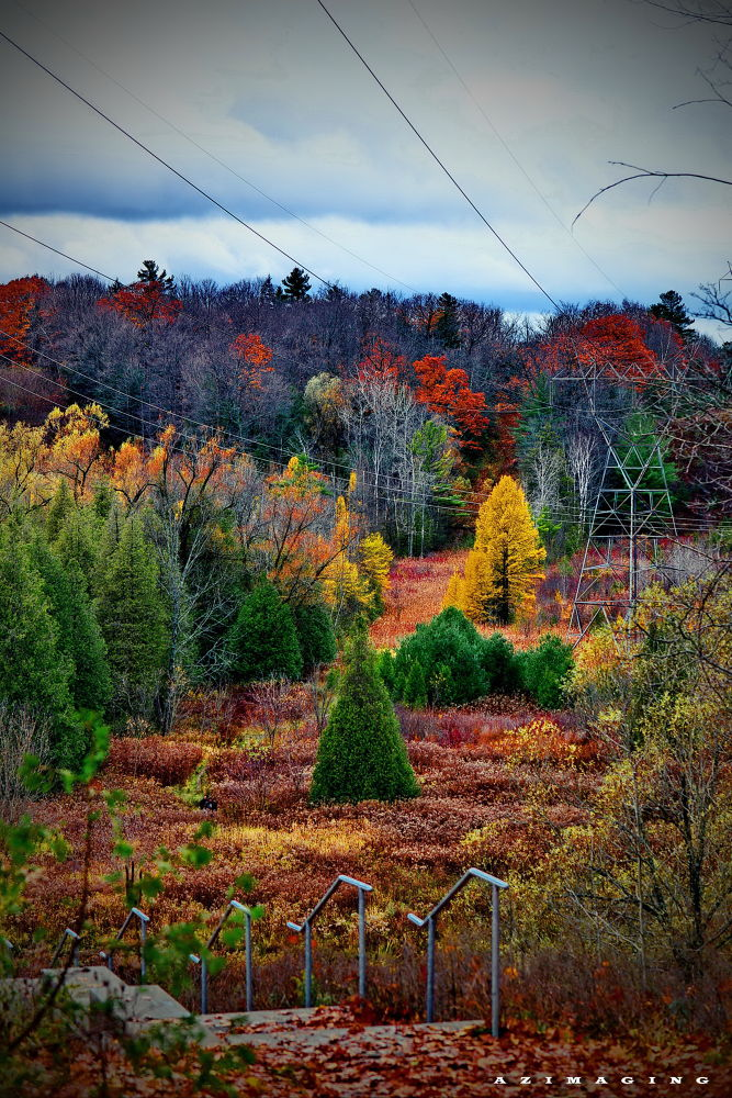 Photo in Nature #fall foliage #ontario  fall #red maple #color #foliage #autumn colors #canada autumn #love #charm #serenity #zen #ajax beauty