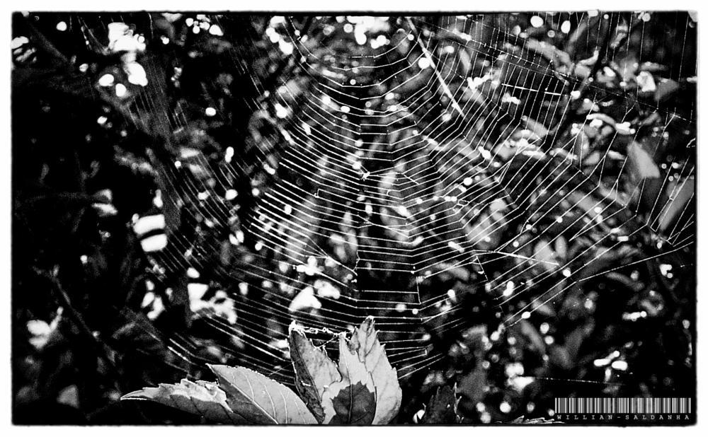 Photo in Black and White #brasilia #brazil #spider #aranha #cerrado