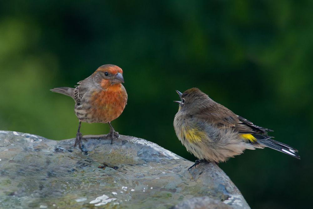 Photo in Animal #birds #bird bath