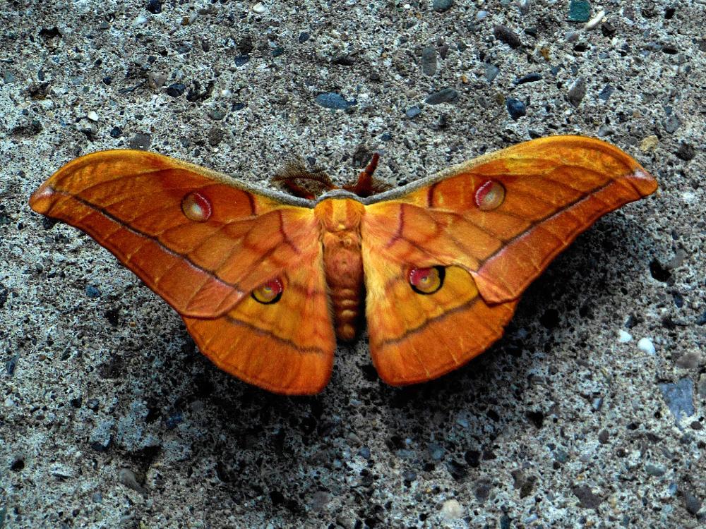 Photo in Macro #animal #nature