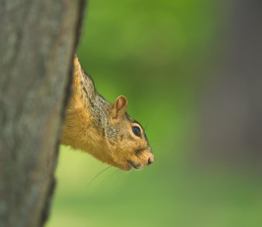 Photo in Animal #fun #animal #park #squirrel #funsummer #canon #depth of field #dof #bokeh