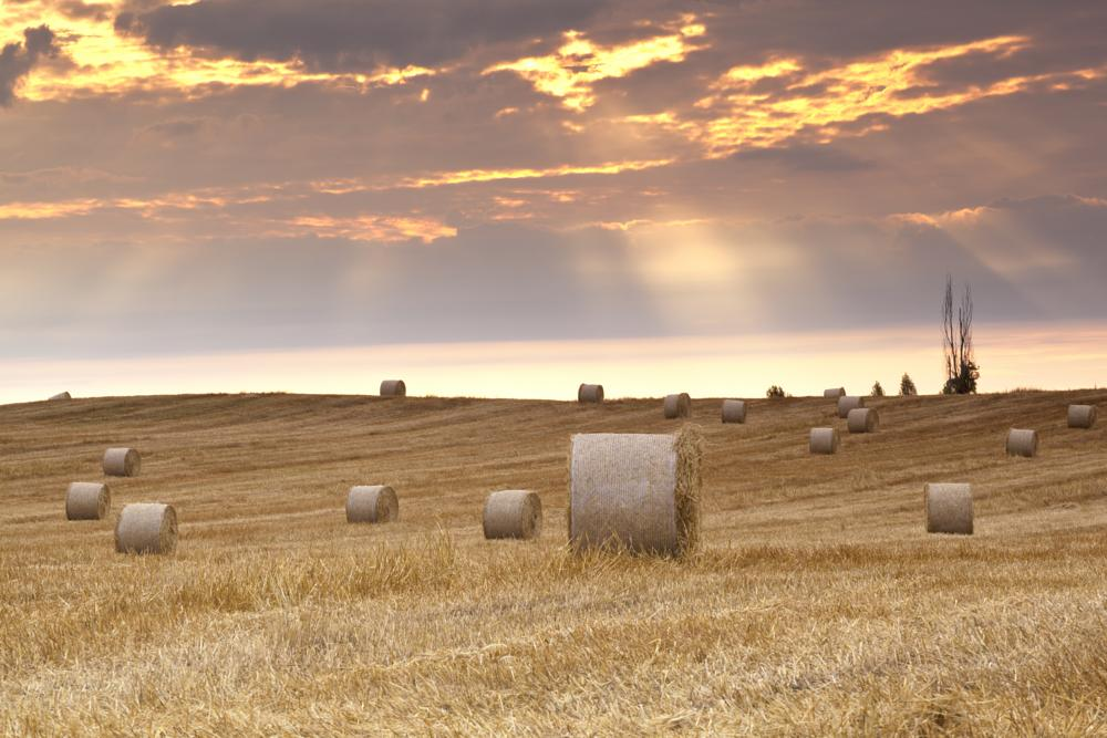 Photo in Rural #field #hay #bales #morning #agriculture #michigan #usa #clouds #sun beams #straw