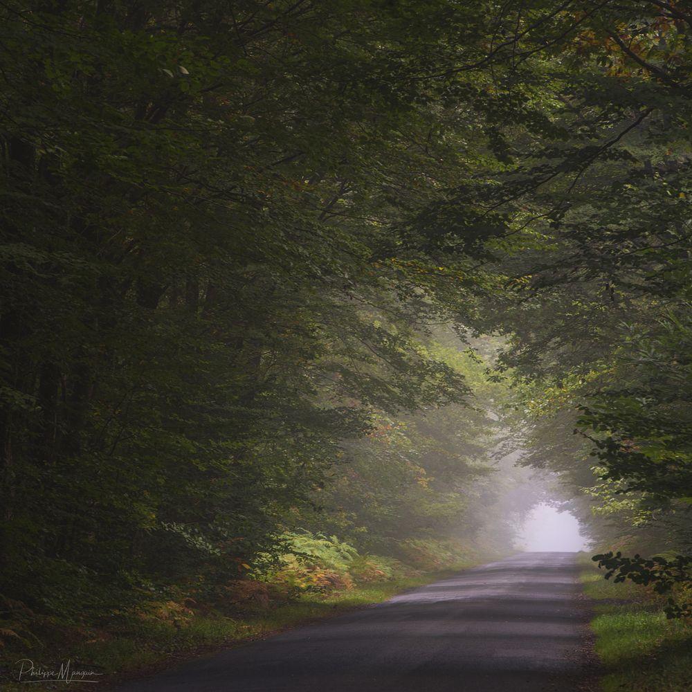 Photo in Nature #broceliande #foret #bretagne #nature #tree #green #vert #brittany