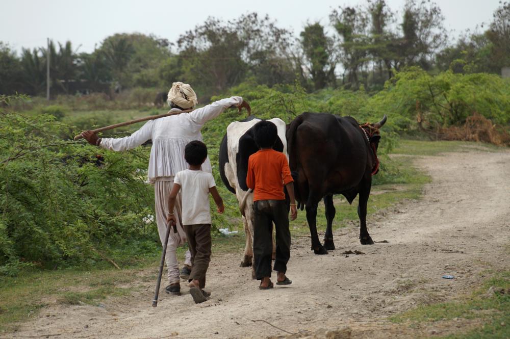 Photo in People #maldhari #india #people #tribal #culture