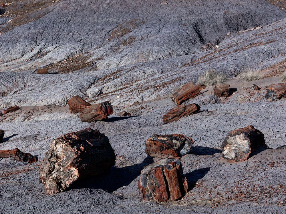 Photo in Nature #petrified #tree #trunk #old #fossil #arizona #petrified forest #amazing #awe