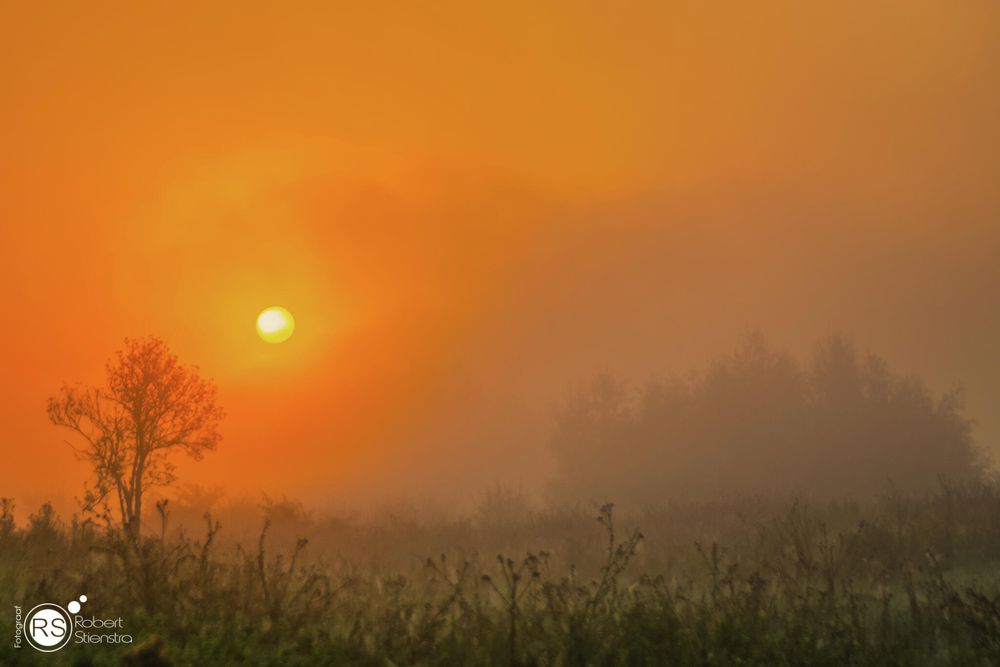 Photo in Landscape #sunrise #sunrises #magic #magical #fog #foggy #mist #misty #mystic #nature #natural forces #orange #landscape #landscapes #landscape photography #riverbanks #wageningen #beautiful #weather #outdoor #goodmorning