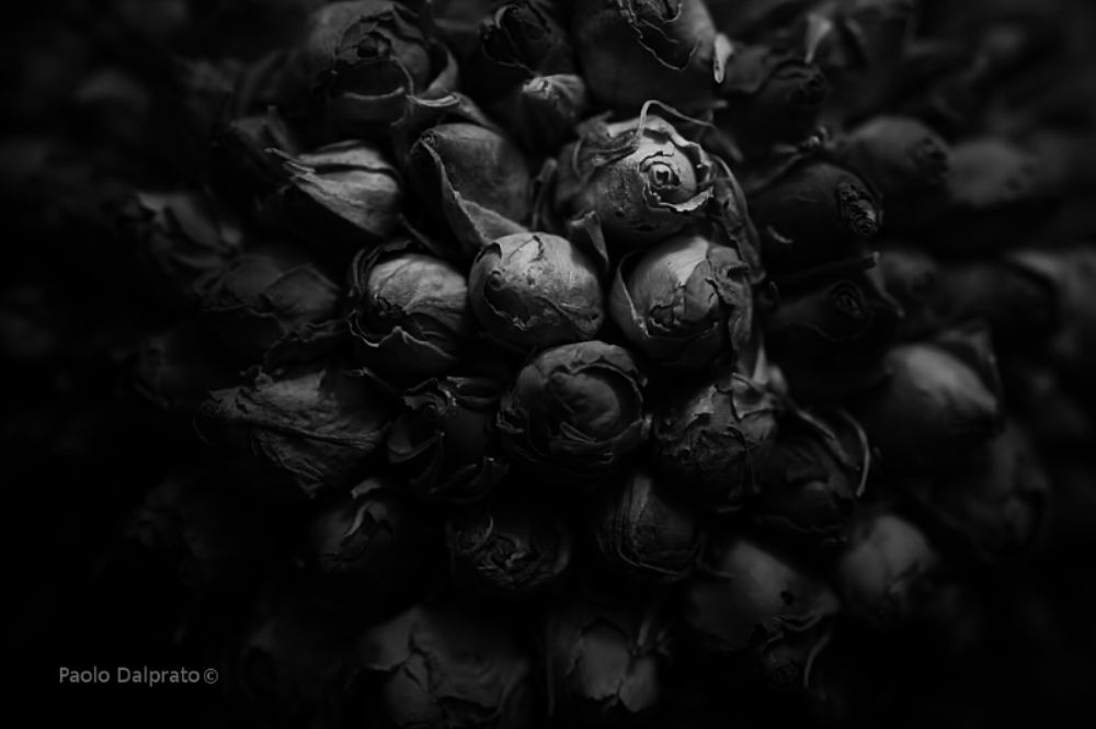 Photo in Black and White #flowers #roses #b&w #macro #canon #sigma