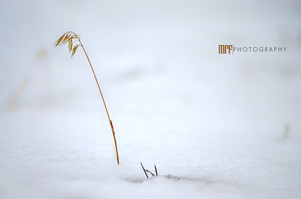Photo in Nature #forlorn #snow #with #ian #ilam