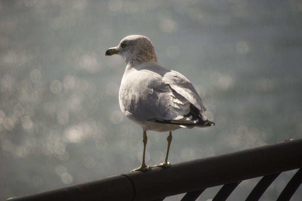 Photo in Random #easr river #nyc #sea gull
