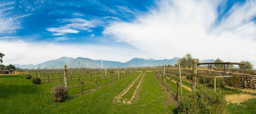 Panorama_viñedo chile
