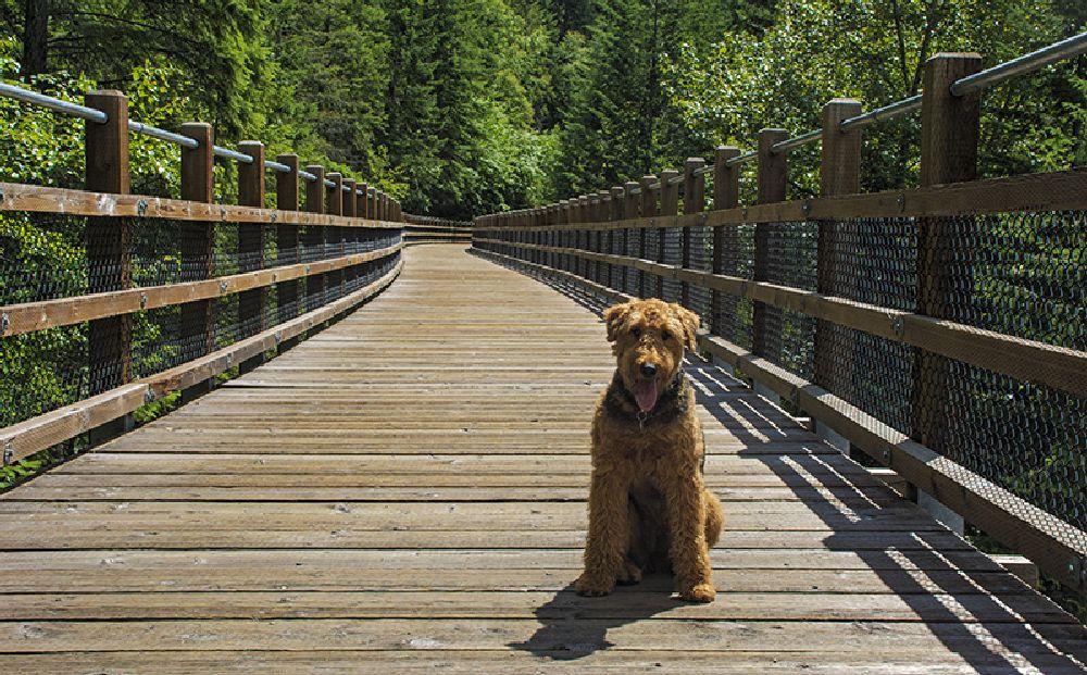 Photo in Animal #animal #nature #bridge #leading line
