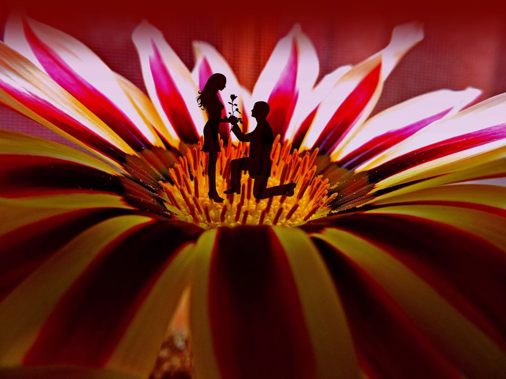 Photo in Fine Art #flower #lovres #red