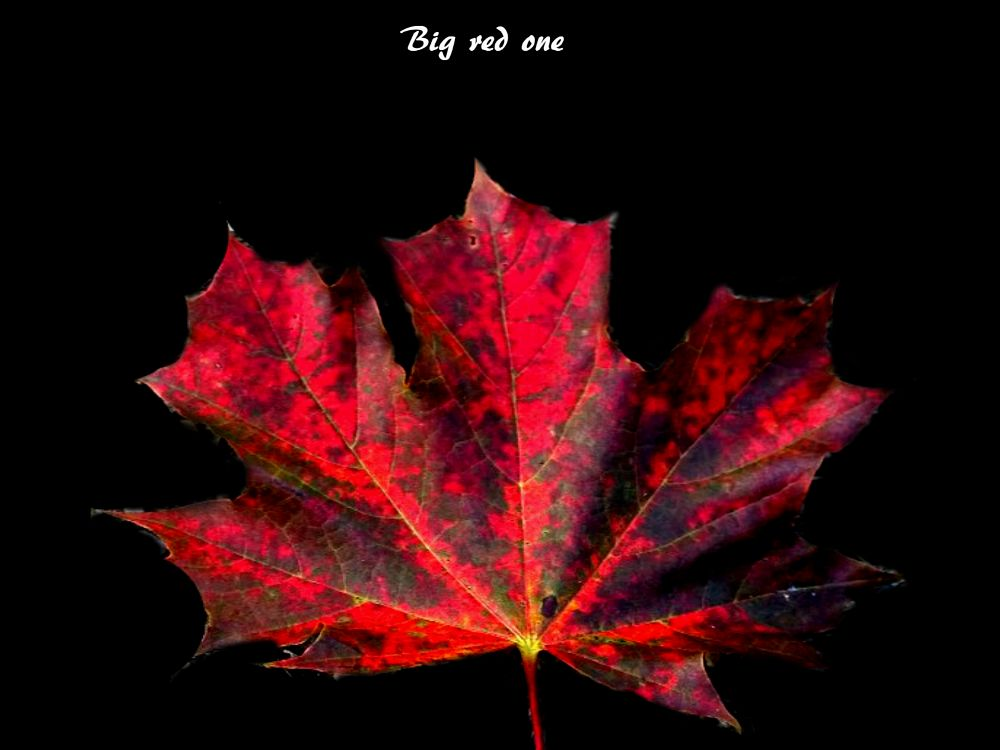 Photo in Macro #fall #big red one #sept