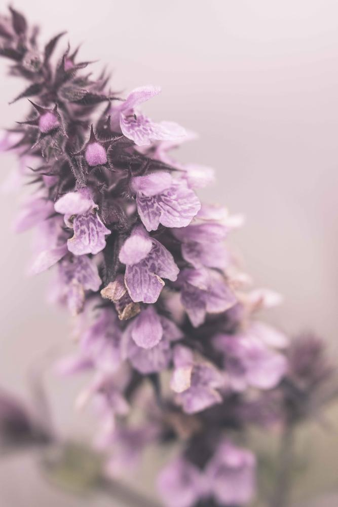 Photo in Macro #nettle #flower #plant #macro