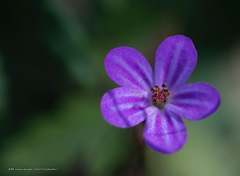 Photo in Nature #fiore #flower #nature #macro