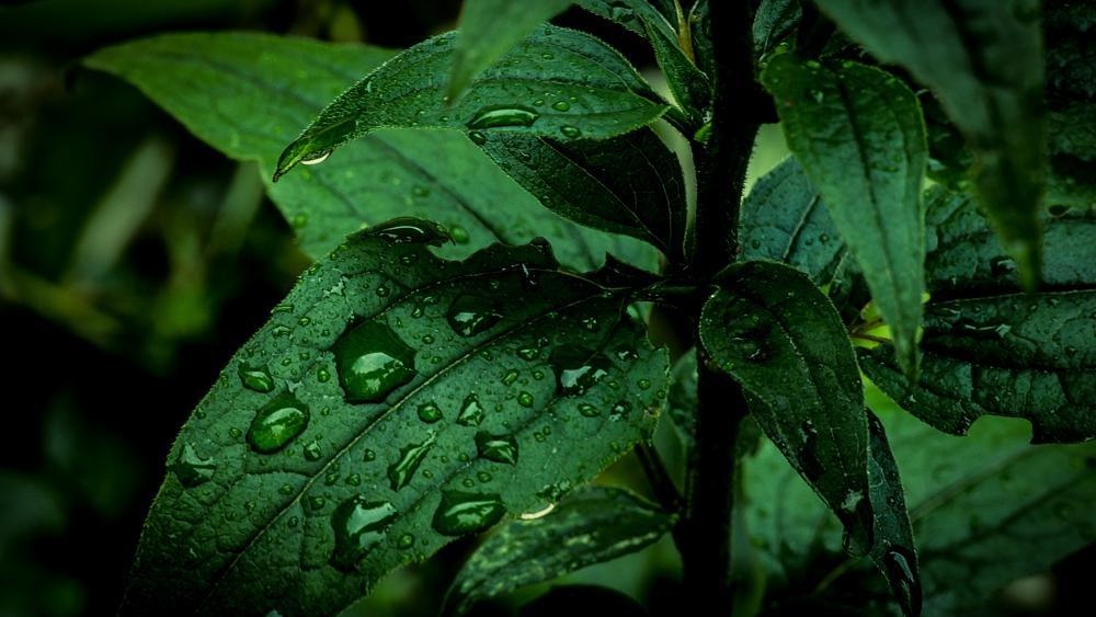 Photo in Nature #rain #drop #leaf #nature #macro