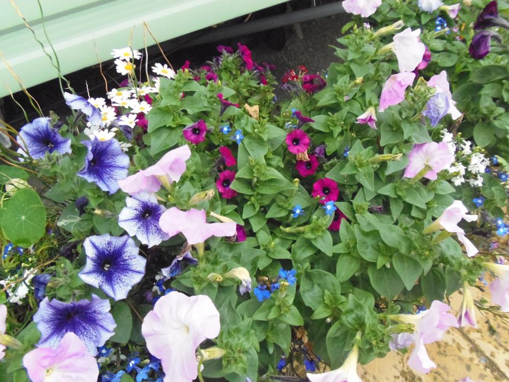 Photo in Nature #pot #colours #flowers #out side