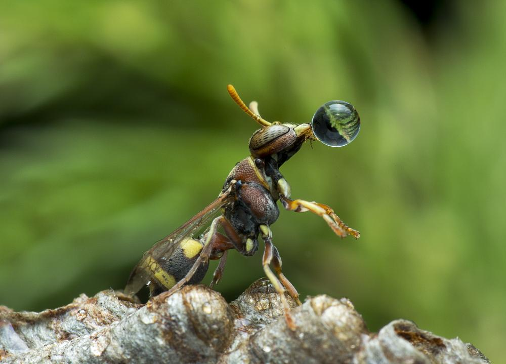 Photo in Macro #animal #wasp #macro #colour #nature
