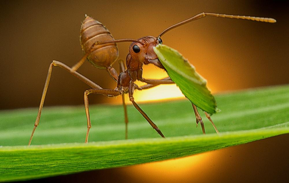 Photo in Macro #animal #insect #ant #macro #colour