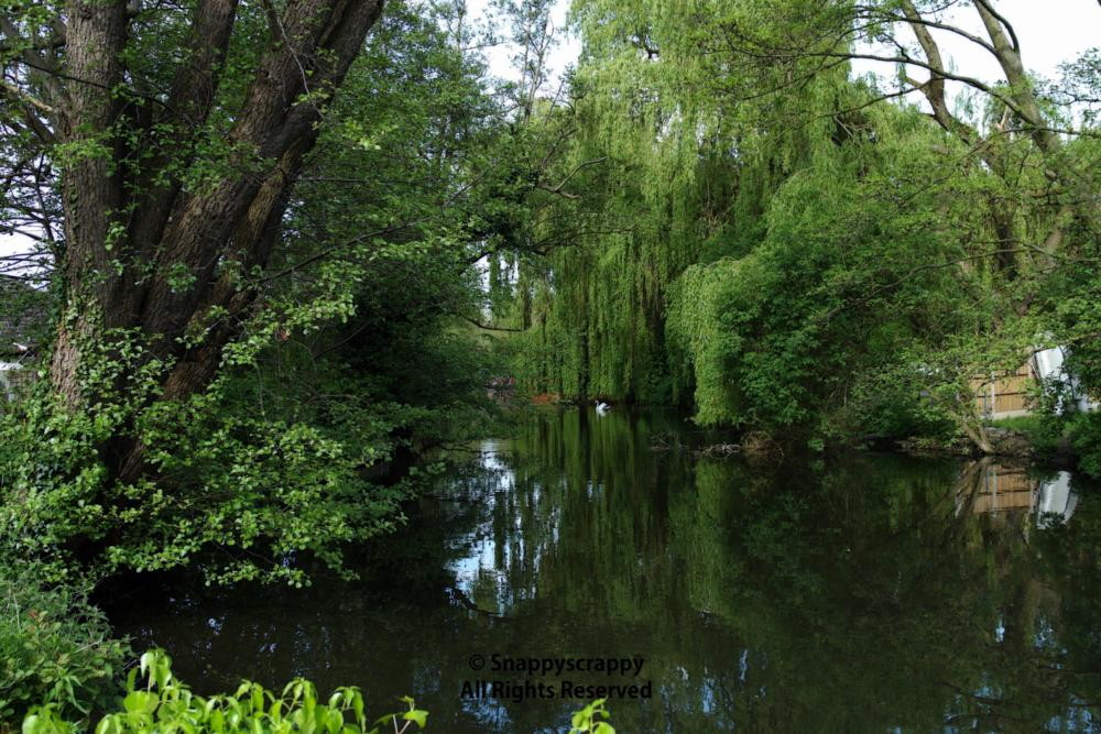 Photo in Landscape #river #willowtree #trees #water #scenic